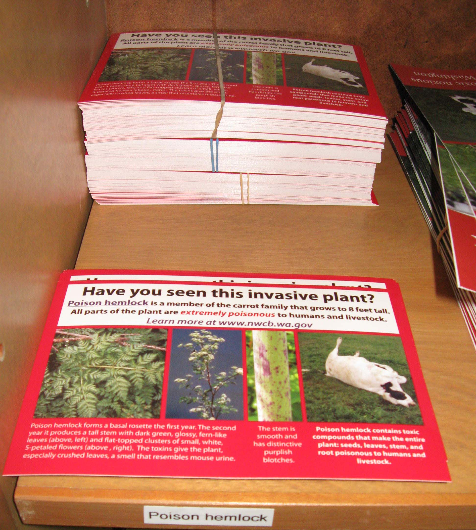 Poison hemlock postcards